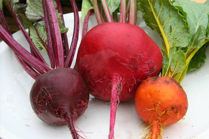 The Beet Goes On During Downton Downtime